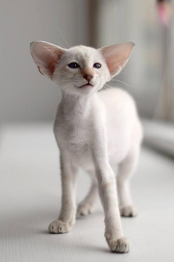 выставка котиков